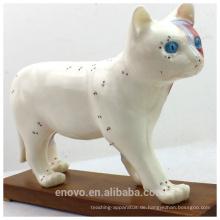 Großhandel Veterinärmodell 12004 Anatomische Modelle Katze Akupunktur Modell