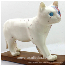 MODÈLE VÉTÉRINAIRE DE GROS 12004 Modèles anatomiques Modèle d'acupuncture de chat