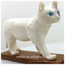 WHOLESALE VETERINARY MODEL 12004 Anatomical Models Cat Acupuncture Model