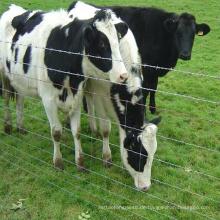 Günstiger Viehzaun der Viehfarm