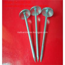 Galvanized Umbrella Head Roofing Nails in Fasteners