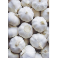 2015 New Crop High Quality Fresh Vegetables Garlic