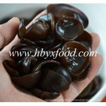 Natural, comestível, madeira, orelha, diferente, tamanhos