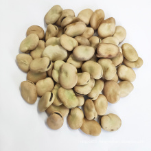 Chinese dried broad beans with export broad beans