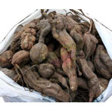 GMP-Reliable Supplier Tripterygium Extract, Tripterygium Wilfordii Extract