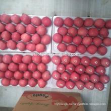 Китай свежие фрукты Яблоко румян Фуджи яблоко