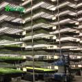 Geführte wachsen Lichter t5 IP33 IP-Bewertung und Leuchtstoffröhre-Einzelteil-Art für das Hydrokultur-Gewächshaus organisch