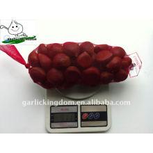 40-60 1kg Netzbeutel X10 frische Kastanie