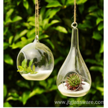 Glass Terrarium For Succulents