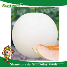 Suntoday White rind with orange-red vegetable hybrid F1 Organic melon seeds planter breder japanese(18014)