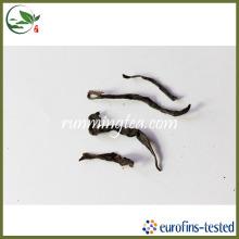 Biscuit moyen élevé et rôti Tian Yao Chinese Tea