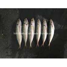New Land Fish Frozen Round Scad