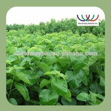free sample ! China wholesale FDA ,KOSHER ,ISO ,HALAL morus alba leaf extract , organic mulberry leaf extract