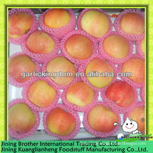 China rote Gala Apfel Fabrik