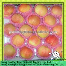 Фабрика красного яблока с низкой ценой