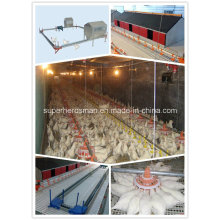 Breeder Poultry Farm Equipment for Poultry Farm