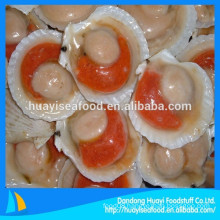 Chinese seafood supplier supply frozen half shell scallop low price