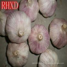 produtores de alho fresco