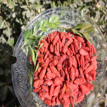 Natural Low Price Free Sample Suszona jagoda Goji