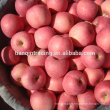 fresh China Fuji apple of Shannxi origin