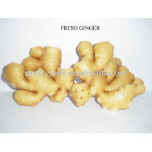 Chinese fresh young ginger