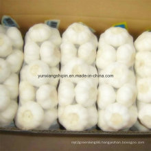 New Crop White Garlic, Fresh Garlic