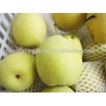 fresh shandong pear from China