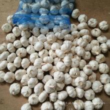Alho branco fresco da neve fresca da colheita de China