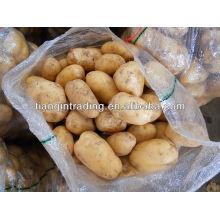 Свежий картофель длинной формы