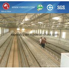 Выход фабрики слоя Тип курица клетка