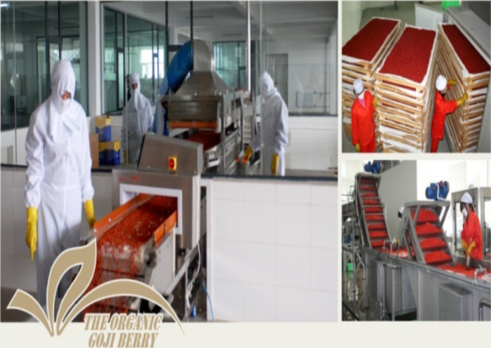 Ningxia New crop Dried Organic and Low agricultural residues Goji berry