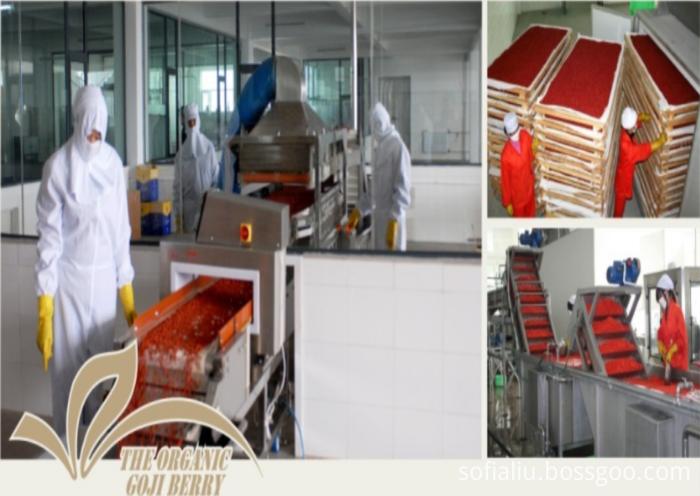 High Quality Certified Top grade Organic goji berry