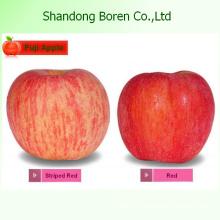 2015 Chinês Frutas Frescas FUJI Apple