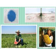 Bio Kalium Humate für Obst für Gemüse organische Fertigation Dünger