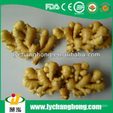 Chinese Air Dried Ginger For UK Market