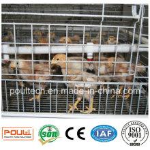 Молодая клетка для выращивания цыплят 1-14 недель