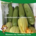 Suntoday азиатских овощей без ГМО гибридные F1 органические светло-зеленый сквош Японская тыква Каботя семена(17011)