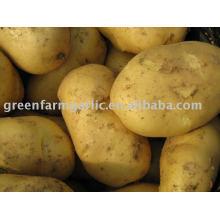 2011 nueva patata fresca