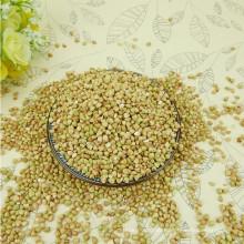 hochwertiger heißer Verkauf schwarzer bitterer Buchweizen für Tee (Fagopyrum esculentum)