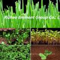 Organische Düngerherstellung mit Aminosäure hinzugefügt Pflanzenpromotor