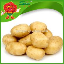 Melhor batata fresca para batata mush fábrica de batata fresca