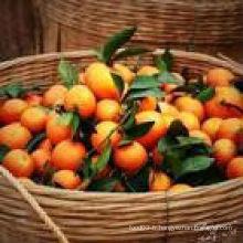Chine Mandarin Orange avec la meilleure qualité
