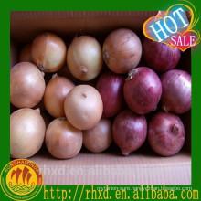 Red Onion Planter Onion Importers Malaysia