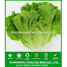 NLT03 Xiwan OP haut rendement meilleures graines de laitue