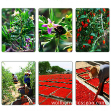 Size 220 Low Pesticide Wolfberry