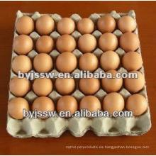 Reciclaje de residuos de papel Bandeja de huevos