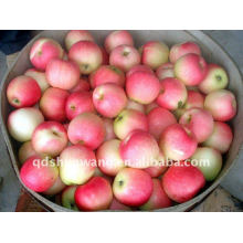 Neuer Erntegala-Apfel