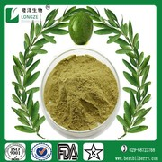 pure olive leaf extract capsules