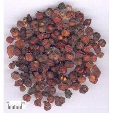 frutos secos de Schisandra Chinensis