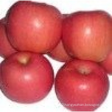 Fresh Apple of China/ High-Qualitied Fruits